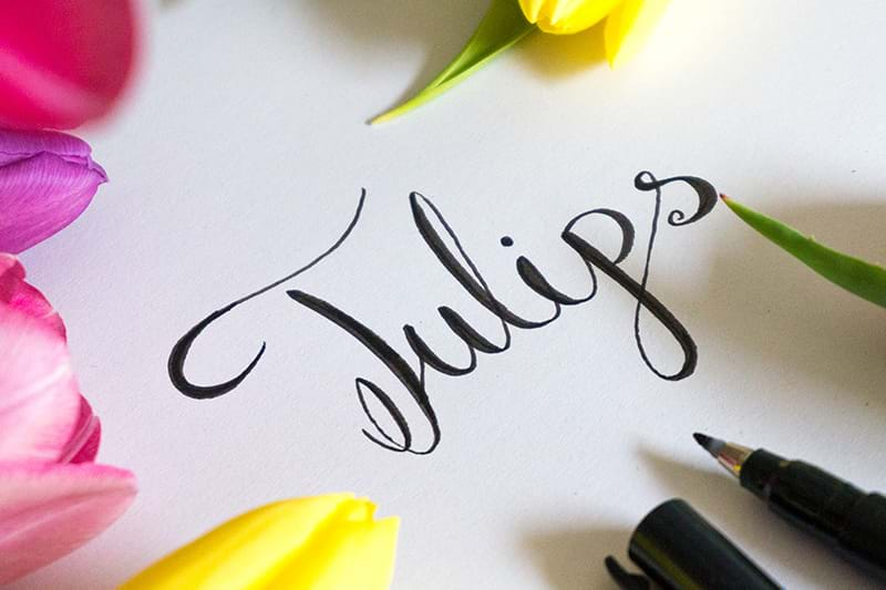 Tulips Lettering